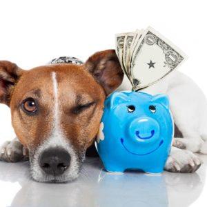 Image Courtesy of Shutterstock